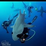 @sharkaddicts's profile picture on influence.co