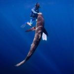@sharkaddicts2's profile picture on influence.co