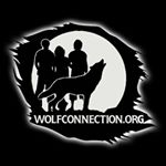 @wolfconnection's profile picture on influence.co