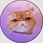 @cheddarcheesepuff's profile picture on influence.co