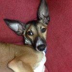 @ringo_thegringo's profile picture on influence.co