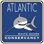 @a_whiteshark's profile picture on influence.co