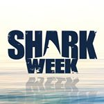@sharkweek's profile picture on influence.co
