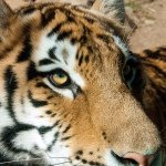 @philadelphiazoo's profile picture on influence.co