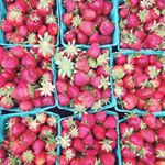 @slowclubcookery's profile picture on influence.co