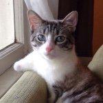 @lilbunnysueroux's profile picture