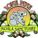 @lonepinekoala's profile picture