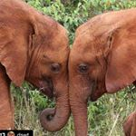 @elephants4elephants's profile picture on influence.co
