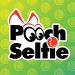 @poochselfie's profile picture on influence.co