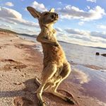 @southaustralia's profile picture on influence.co