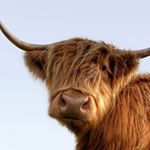 @visitscotland's profile picture on influence.co