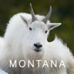 @visitmontana's profile picture on influence.co