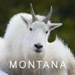 @visitmontana's profile picture