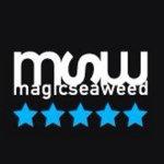 @magicseaweed's profile picture