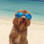 @colbythecavapoo's profile picture on influence.co