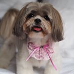 @midge_the_dog's profile picture on influence.co