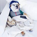 @juniorbulldog's profile picture on influence.co