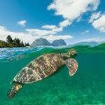@lordhoweislandtourism's profile picture on influence.co