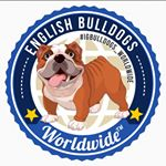 @igbulldogs_worldwide's profile picture on influence.co