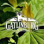 @visitgatlinburg's profile picture