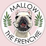 @mallowfrenchie's profile picture on influence.co