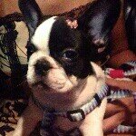 @vicky_the_frenchie's profile picture on influence.co