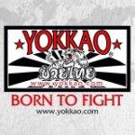 @yokkao's profile picture