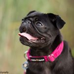 @gwentheblackpug's profile picture on influence.co