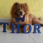 @thor_chow's profile picture on influence.co