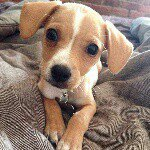 @dogs_._lovers's profile picture on influence.co