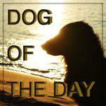 @dogoftheday's profile picture on influence.co