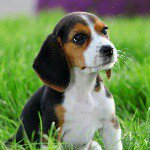 @beagleworld's profile picture on influence.co
