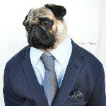 @nutellothepug's profile picture on influence.co