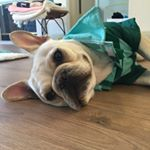 @doritothefrenchie's profile picture on influence.co