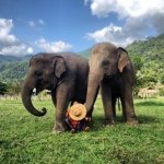 @saveelephantfoundation's profile picture on influence.co
