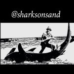 @sharksonsand's profile picture on influence.co