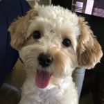 @buddy_morkie's profile picture on influence.co