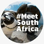 @meetsouthafrica's profile picture