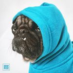 @meanmugpug's profile picture on influence.co