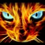 @bengals_the_beautiful_cat's profile picture on influence.co