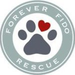 @foreverfidorescue's profile picture on influence.co
