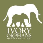 @africanwildlifetrust's profile picture on influence.co