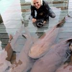 @biminisharkgirl's profile picture on influence.co