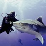 @sharkdiving's profile picture on influence.co