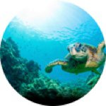 @marineconservationcuties's profile picture on influence.co