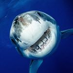 @shark_explorers's profile picture on influence.co