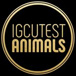 @igcutest_animals's profile picture on influence.co