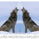 @apexprotectionproject's profile picture on influence.co