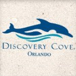 @discoverycove's profile picture
