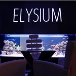 @elysiumsurgispa's profile picture on influence.co